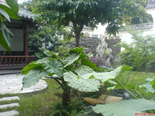 万博翠湖独立别墅,送超大花园,南北对流,豪华装修,价格超笋.,