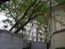高安路洋房租房65000元/月