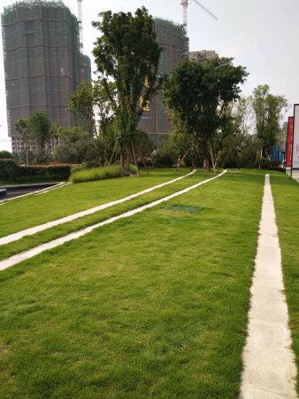 360万方小学轨道站商圈民乐旁带巴蜀中央和八哈尔滨市公园小学图片