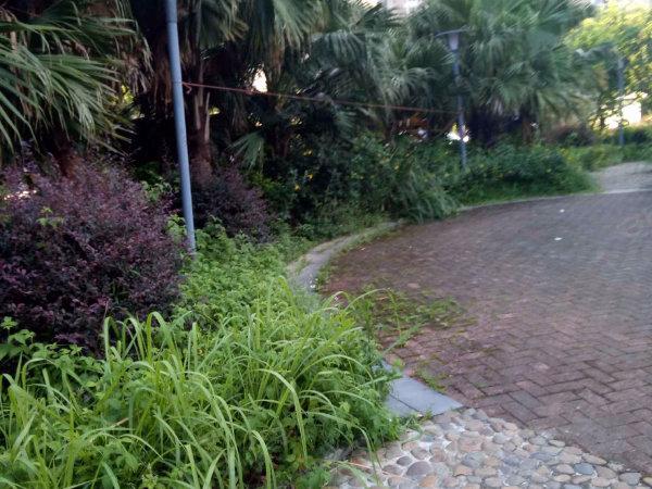 春风苑一区户型图实景图片
