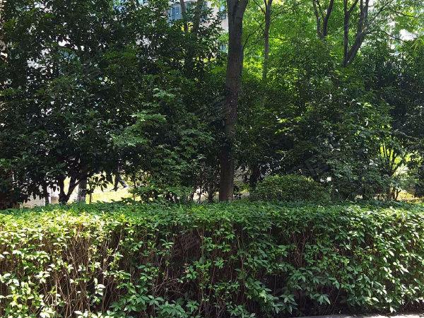 陽光水榭花園(201-231幢)戶型圖實景圖片
