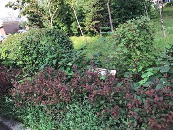 上台花园C区户型图实景图片