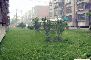 北京奥林匹克花园四期怎么样 北京奥林匹克花园四期和光华小区哪个好