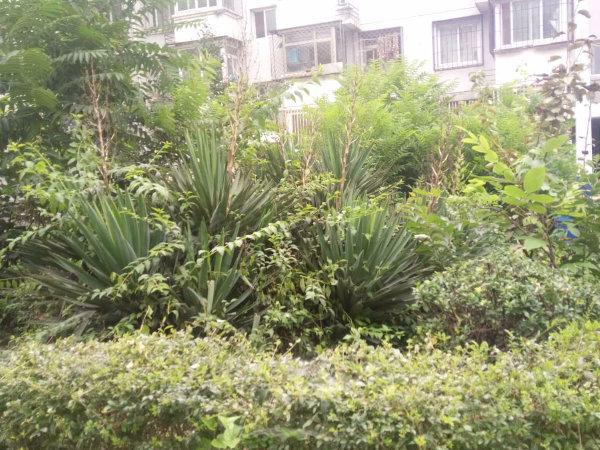 隆曦园B区户型图实景图片