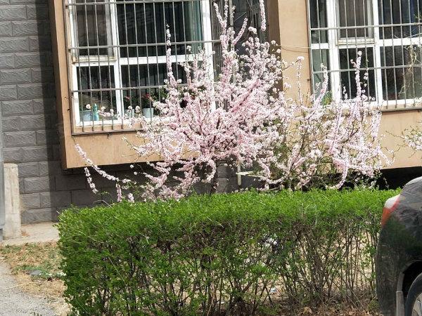 锦绣城(一区)户型图实景图片