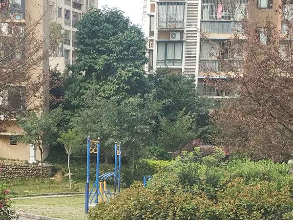白鹿丽苑户型图实景图片