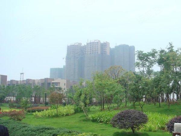 巢上城东区户型图实景图片