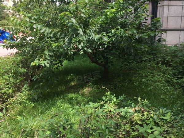 绿地海域中央墅(B区)户型图实景图片