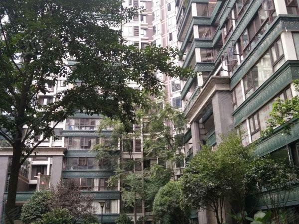 神仙樹大院戶型圖實景圖片