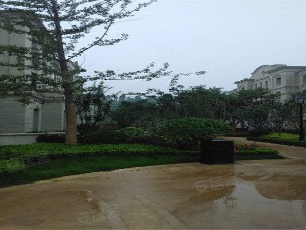 海尔绿城玫瑰园户型图实景图片