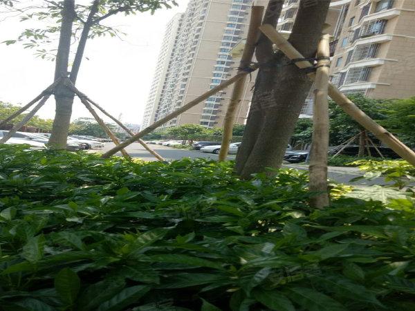 海航国兴城A区户型图实景图片