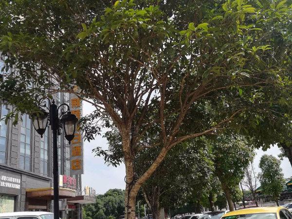 东光国际公寓户型图实景图片