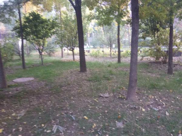 褐石园户型图实景图片