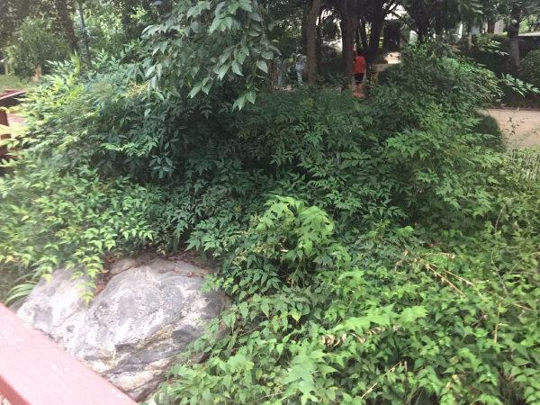 天地源枫林绿洲户型图实景图片