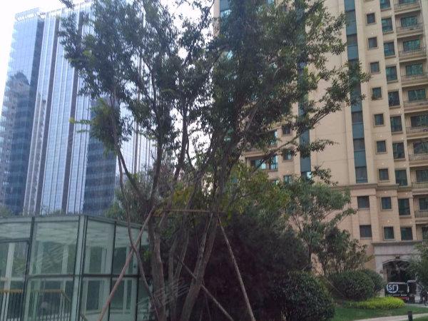 恒大雅苑(西区)户型图实景图片