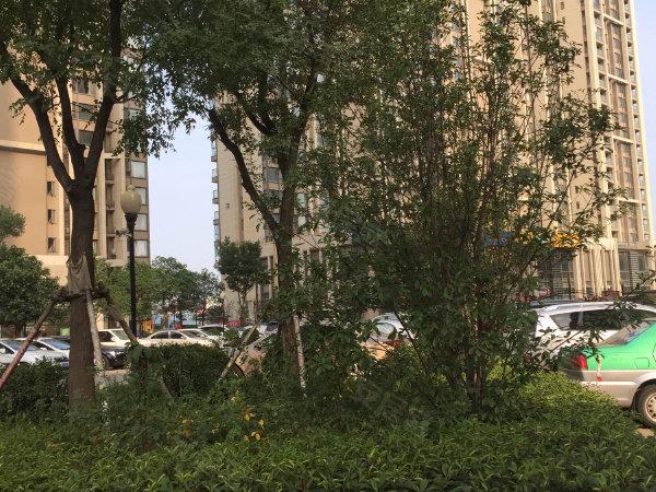升龙广场A区户型图实景图片