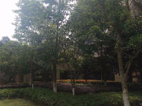 金都夏宫(公寓)户型图实景图片