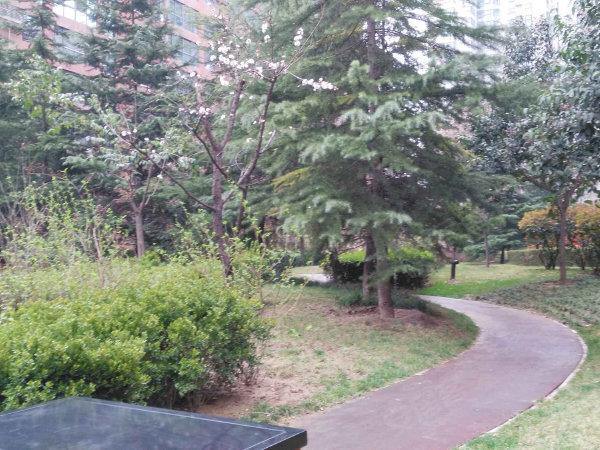 白桦林居户型图实景图片