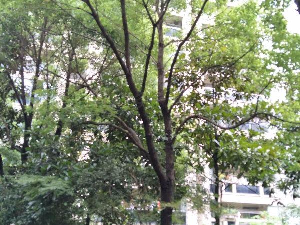 海上海户型图实景图片