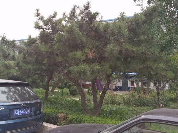 复兴路79号院户型图实景图片
