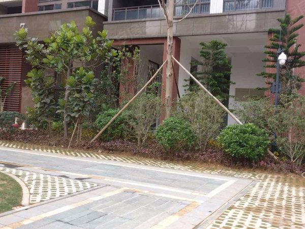 德瑞花园户型图实景图片