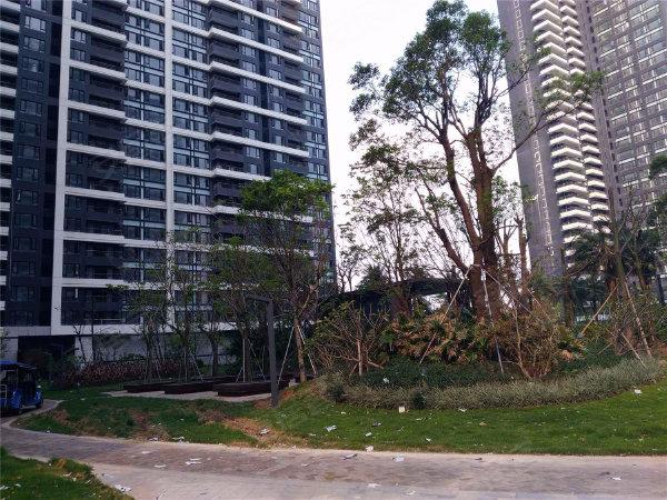 中信红树湾南区户型图实景图片