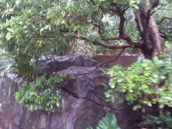 香蜜湖九号大院户型图实景图片