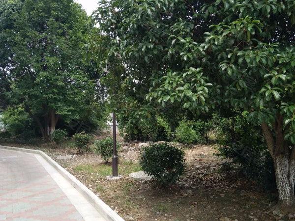 香樟园户型图实景图片