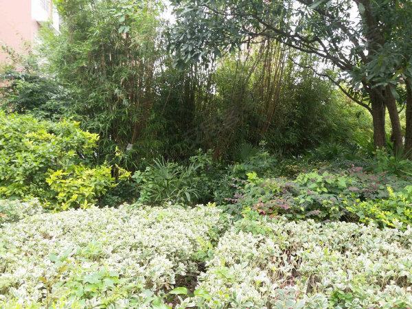 锦湖金利花园户型图实景图片