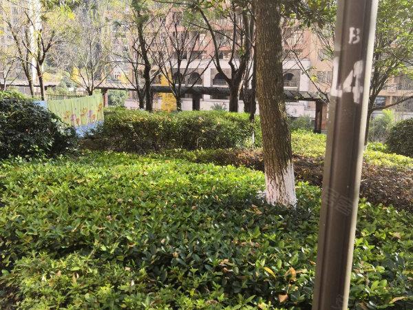 保利温泉新城二期户型图实景图片