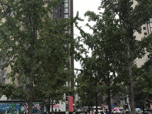 中贸广场户型图实景图片