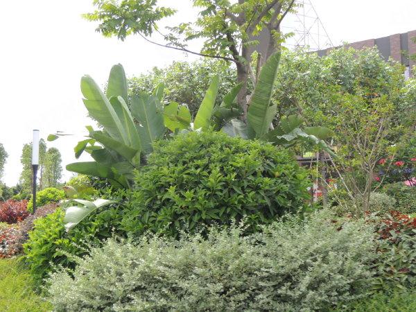 金地扑满花园户型图实景图片