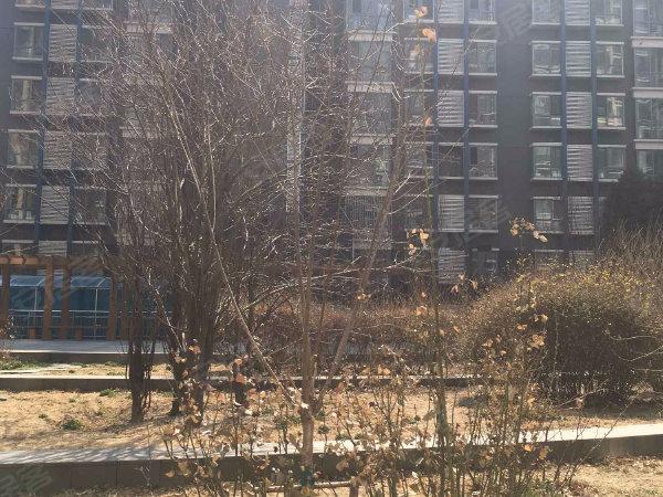 蓝山国际公寓户型图实景图片