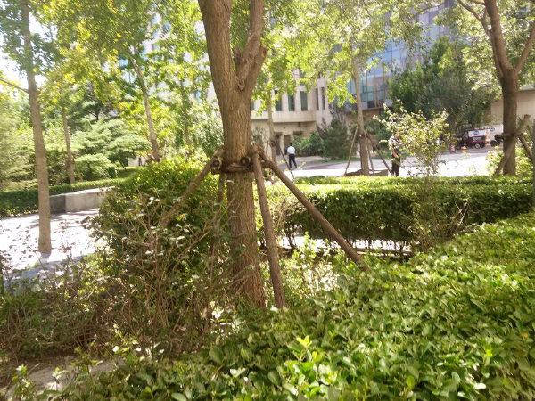 北方中惠国际中心户型图实景图片