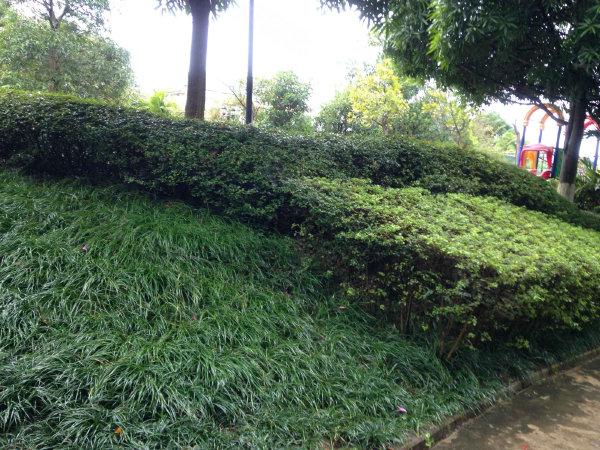 中房翡翠园一期户型图实景图片