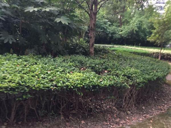 时代中央花园户型图实景图片