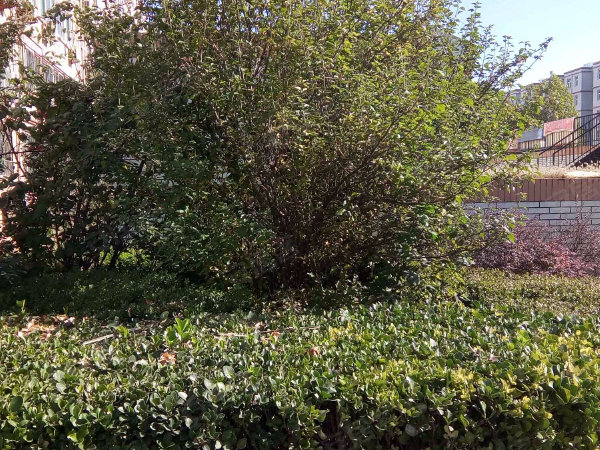 秀兰康欣园北区户型图实景图片