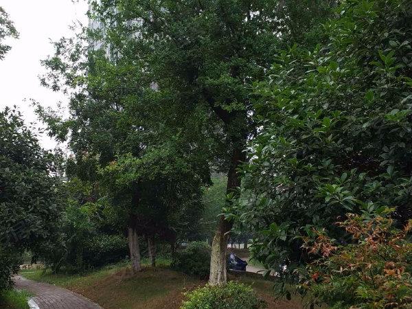 武湖新天地北区户型图实景图片