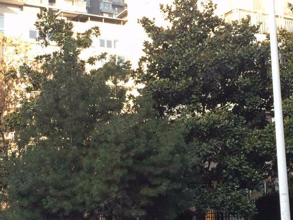 金地湖城大境天字一号户型图实景图片