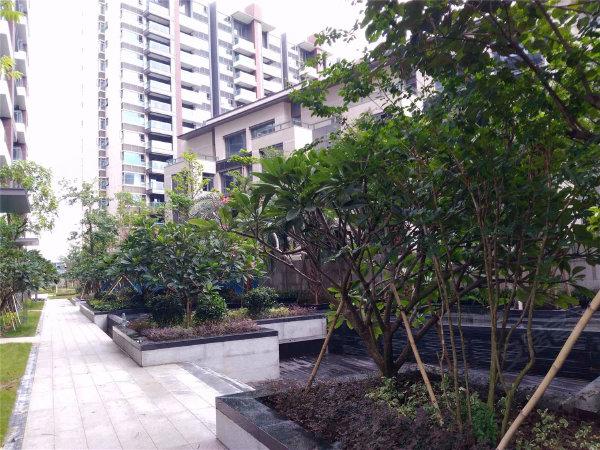 红树别院户型图实景图片