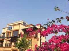 观湖园新鲜好房急租 精装4房 带200平大花园 有钥匙看房
