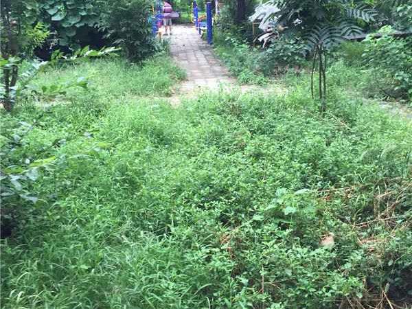 观音寺北里小区户型图实景图片