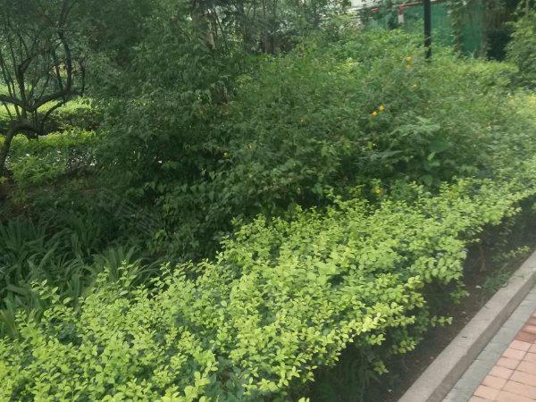 天鹅湾南区户型图实景图片