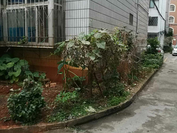 龙华花园户型图实景图片