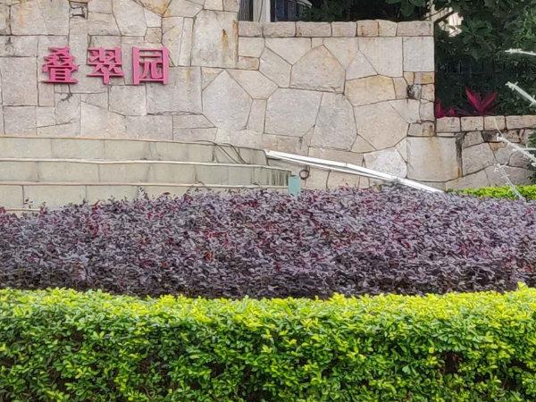 凱茵新城疊翠園戶型圖實景圖片