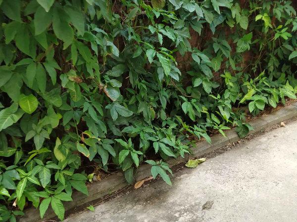 富豪花园户型图实景图片