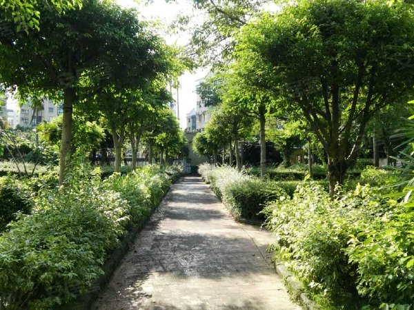 紫荆花园(别墅)户型图实景图片