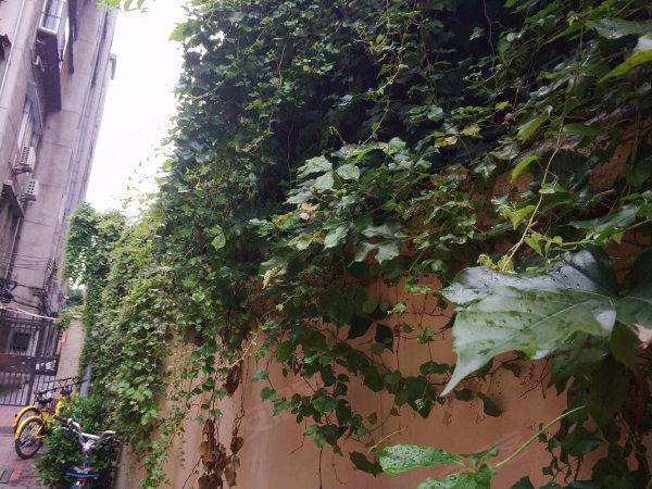 京桂花园户型图实景图片