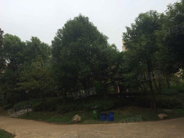 中新森林海户型图实景图片