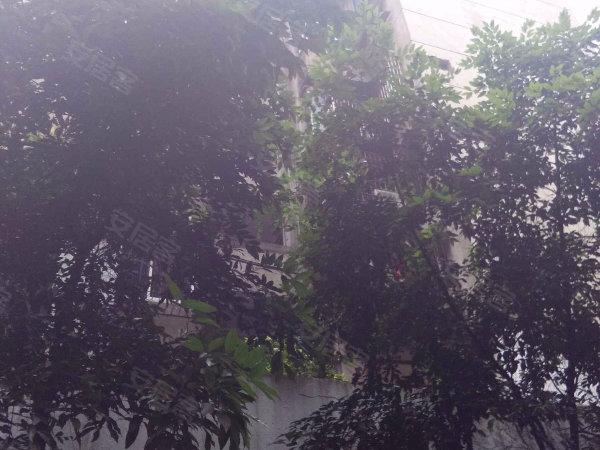 杨梨苑户型图实景图片